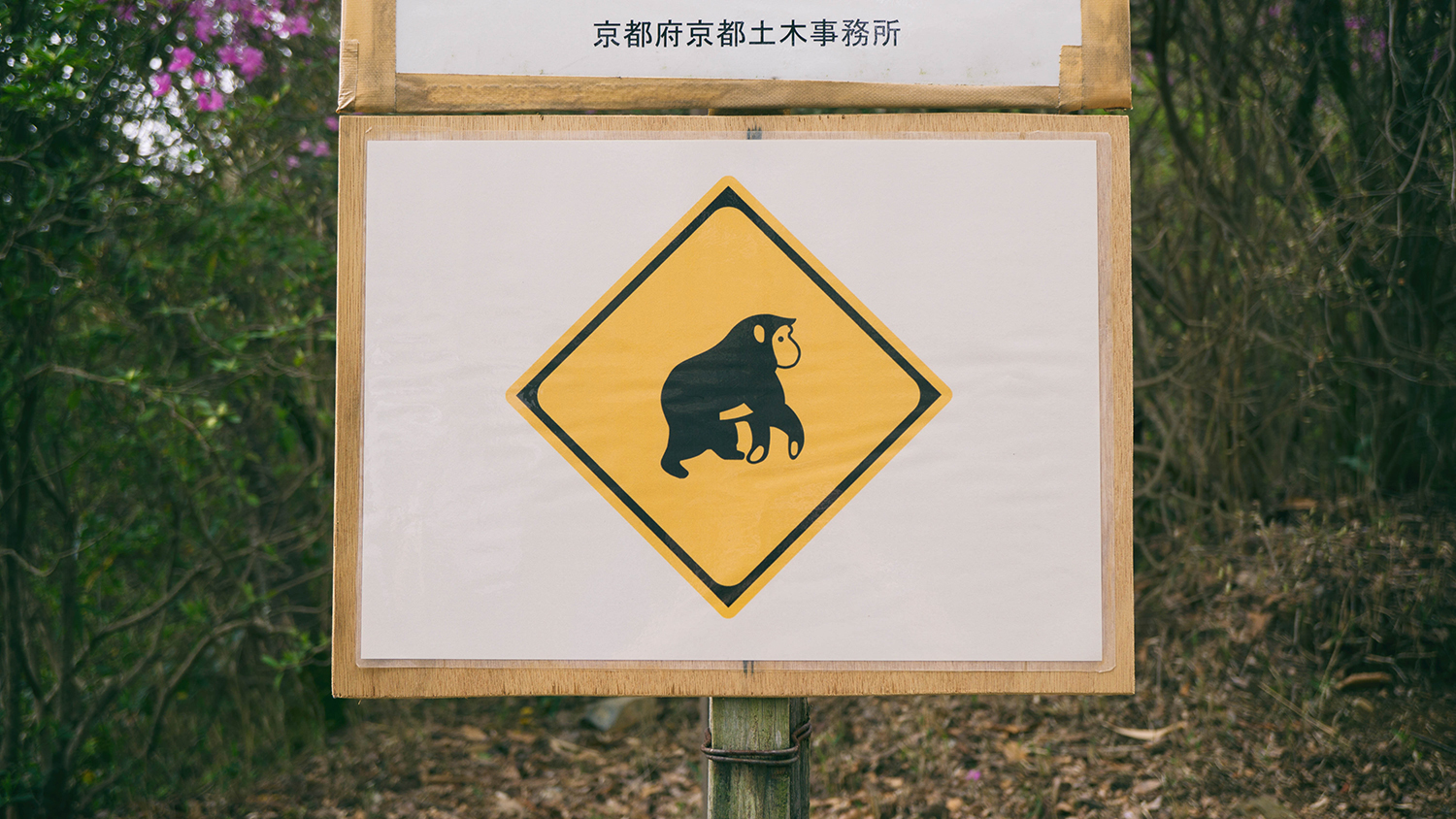 A sign warning of Monkeys?? A thing to come?!