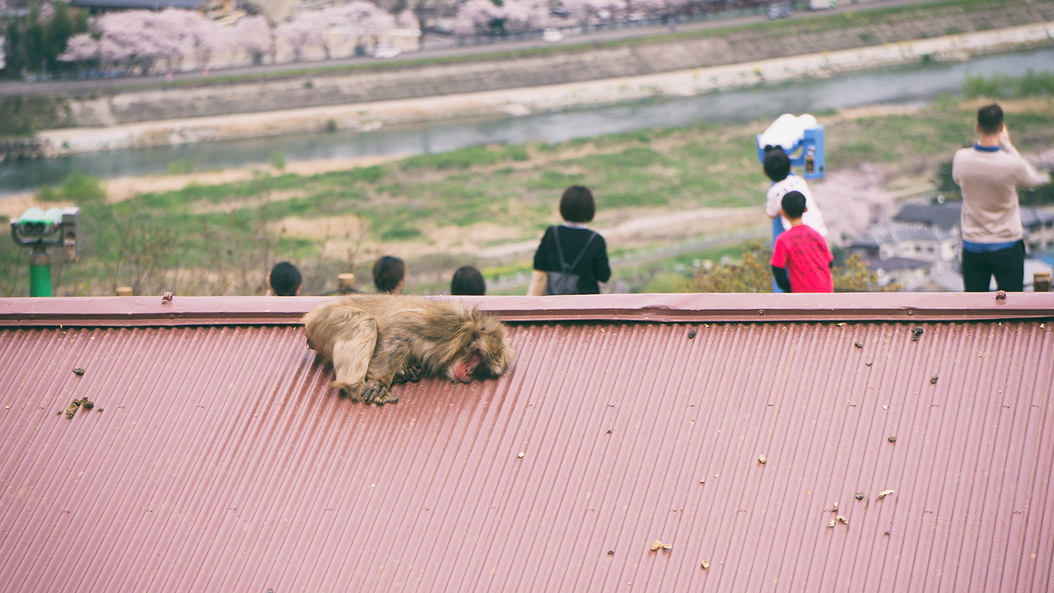 Monkey on the roof!