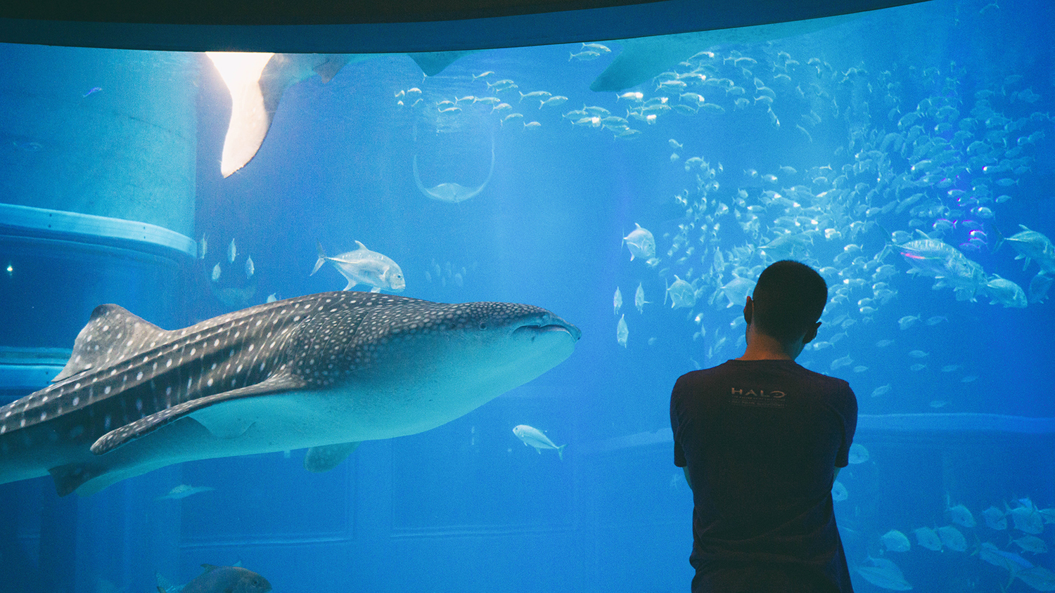 Reid enjoying the massive Whale Shark.